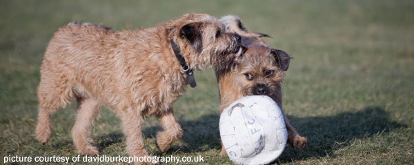 Monty and Olly share a football